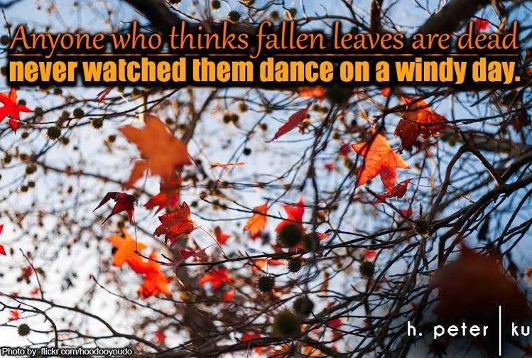 Anyone-who-thinks-fallen-leaves-are-dead-never-watched-them-dance-on-a-windy-day