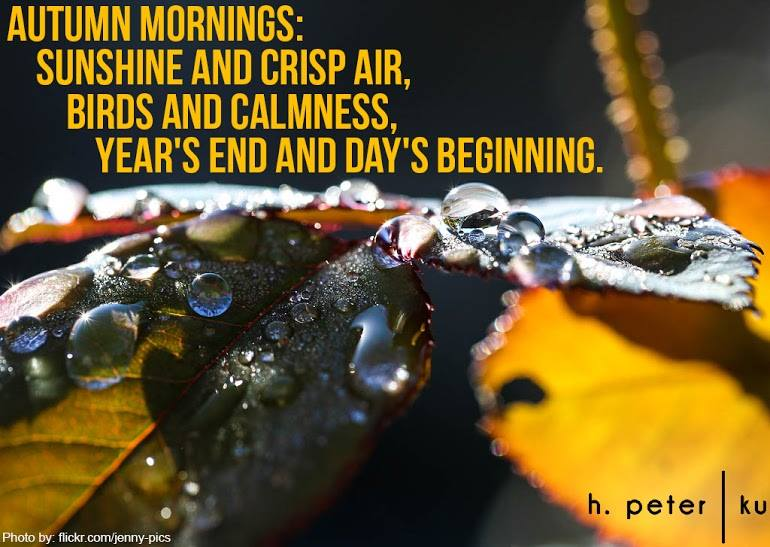 Autumn-mornings-sunshine-and-crisp-air-birds-and-calmness-yeras-end-and-days-beginning