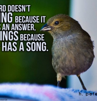A bird doesn't sing because it has an answer – It sings because it has a song