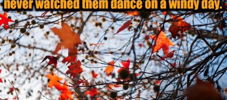 Anyone who thinks fallen leaves are dead never watched them dance on a windy day