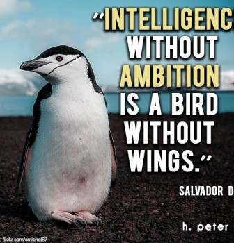 Intelligence without ambition is a bird without wings – Salvador Dali