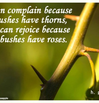 We can complain because rose bushes have thorns – Or we can rejoice because thorn bushes have roses